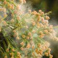 かさかさするお肌の正体、実はお肌の花粉症かもしれません。